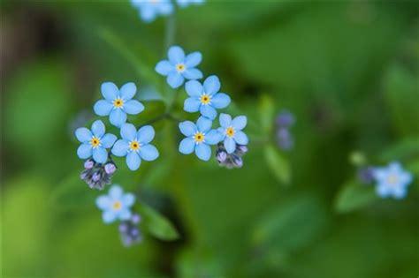 tiny blue flowers: mak_kawa: galleries: digital