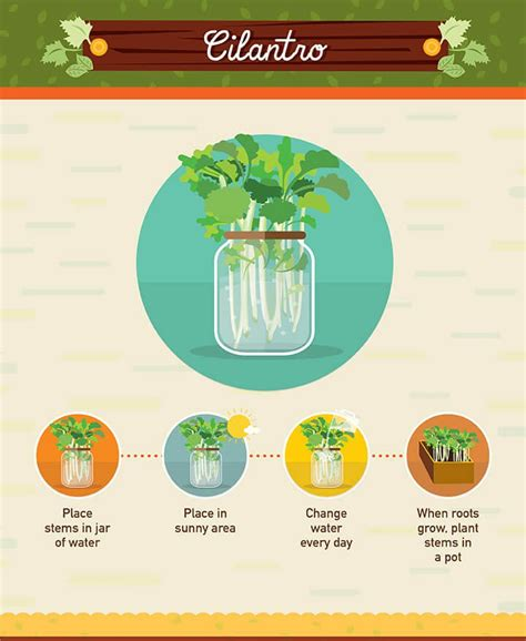 vegetables you can regrow regrow food scraps 19 vegetables you can grow