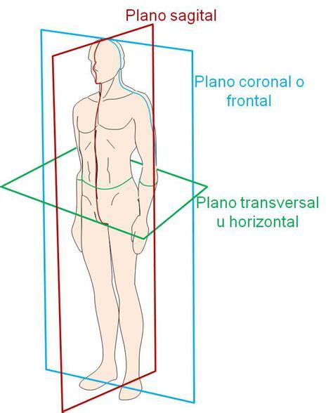 anatoma para posturas de posici 243 n anat 243 mica planos y ejes del cuerpo humano anatomia musculoesquel 201 tica
