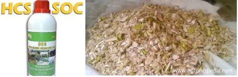 Fermentasi Pakan Ternak Dengan Soc cara fermentasi basah gedebok pisang dengan soc hcs