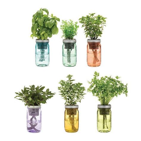 mason jar indoor herb garden hydroponic grow kit