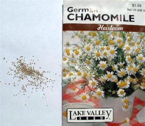 Bibit Bunga Chamomile cara menanam bunga chamomile dari biji bibitbunga