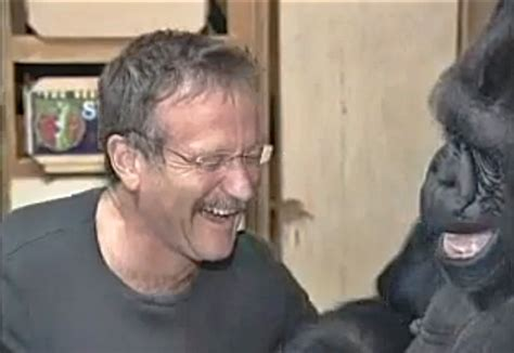 Koko Vio this of robin williams communicating with koko the gorilla will floor you deadstate