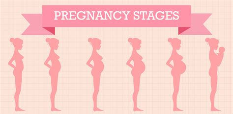pregnancy stages stages of pregnancy weeks 1 20