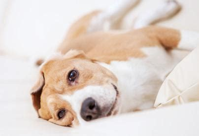 at what age do puppies calm best calming aid stress and anxiety relief particular paws