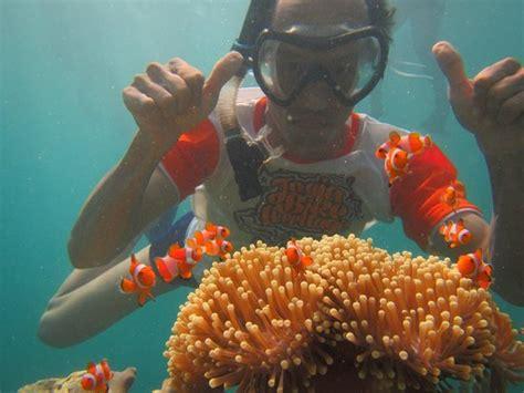 Ikan Nemo foto bersama ikan nemo di salah satu spot snorkling picture of karimunjawa java tripadvisor