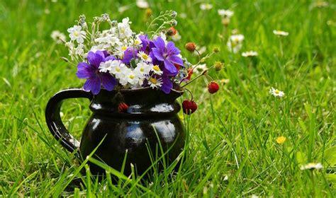 semi prato fiorito semina prato fiorito idee green
