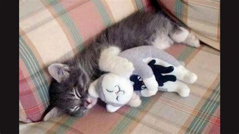 Boneka Hewan Kucing Imut gambar hewan peliharaan lucu yang bisa bikin senyum toplucu