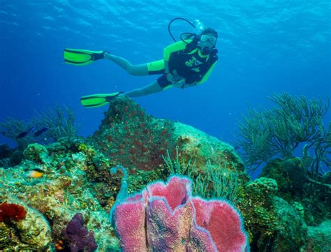 glass bottom boat eilat price discover scuba diving in cozumel cozumel cruise excursions