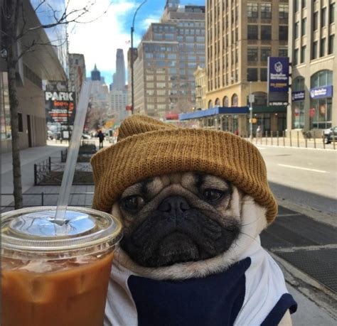 doug the pug cup 25 times doug the pug accurately described your relationship with food