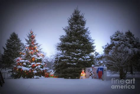 outdoor christmas tree photograph by thomas woolworth