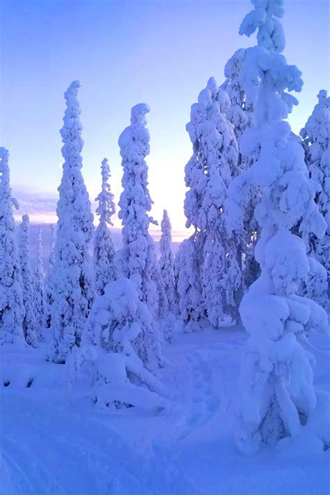 snow trees iphone wallpaper hd