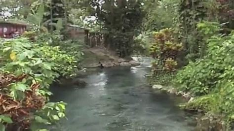 roaring river ital garden west jamaica youtube
