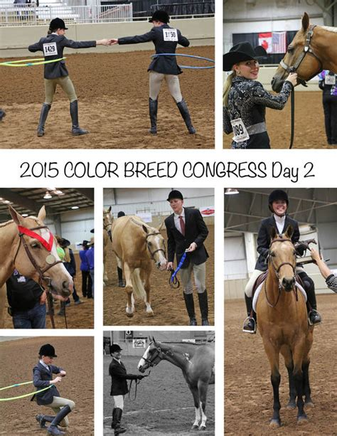 color breed congress day 2 around the rings at color breed congress equine