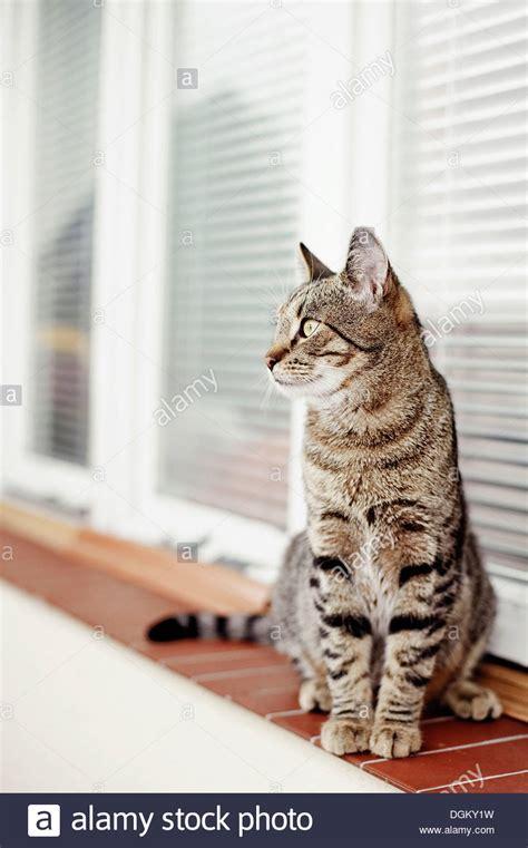 fensterbrett katze haus wilde katze sitzt auf einem fensterbrett stockfoto