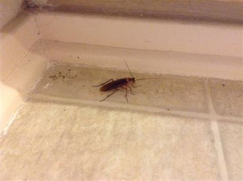 roaches in bathroom 28 images room size picture of row