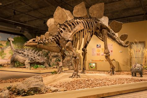 dinosaurs with special reference to the american museum collections books gallery glendive dinosaur fossil museum