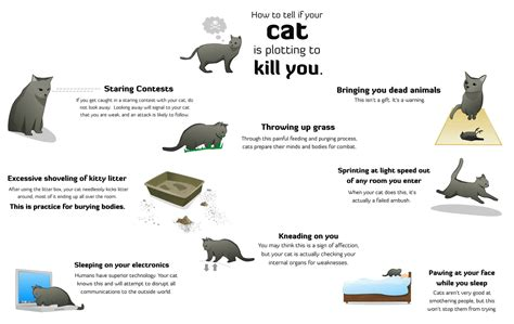 how to tell if your cat is plotting to kill you the oatmeal top 10 of the most dangerous lolcats o guns n posers