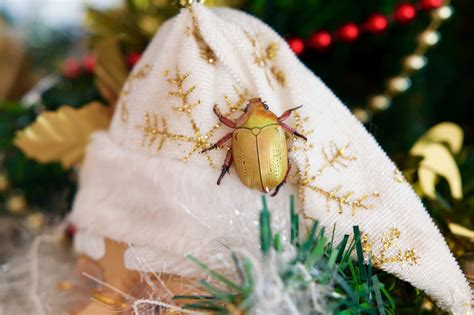 is your christmas tree hiding bugs pest control long