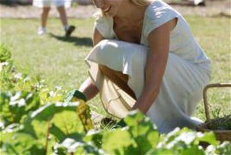 using peat moss in vegetable garden 100 using peat moss in vegetable garden peat moss