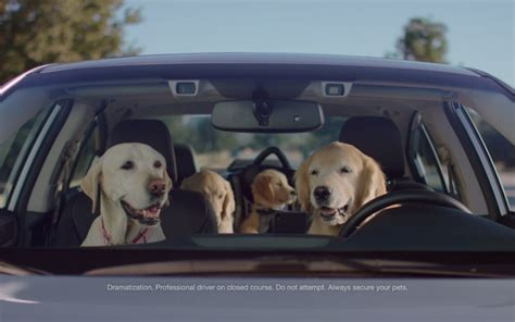 subaru commercial with dogs the barkleys return for the puppy bowl in the subaru commercials the news
