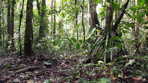 small in rainforest ecuador with stilt root palm