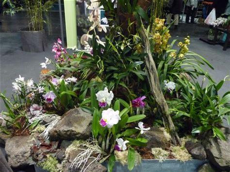 Orchideen Im Garten by Orchideen Roehl