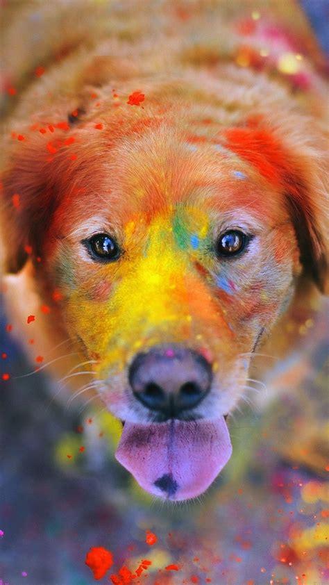 fonds decran chats  chiens pour iphone  ipad