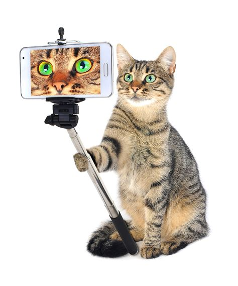 pet technologies archives foodbev media did pet posers on social media cause spending surge