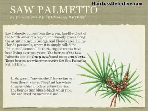 palmetto natural treatment   stop hair loss