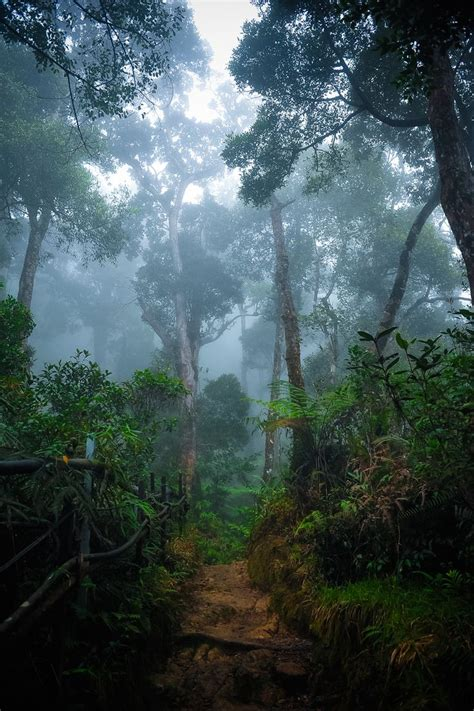 amazon indonesia 132 best images about rainforests on pinterest south