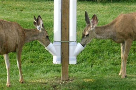Backyard Deer Feeder by Deer Feeders Tips To Deer For And Backyard