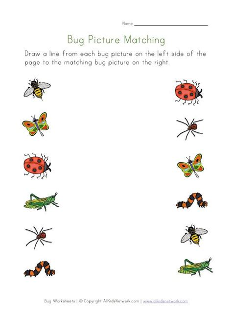 activities for kindergarten matching worksheets kids 31 best images about preschool bugs insects on
