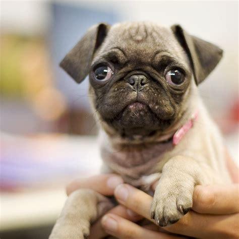 where did dogs originate where do small dogs come from rover