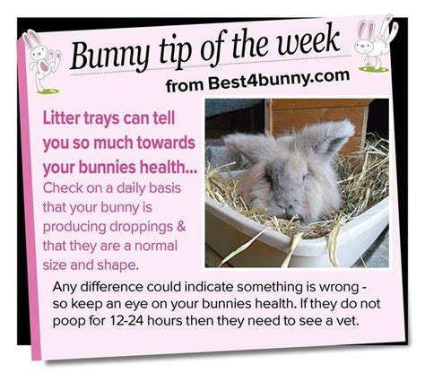 Must For The Week The House Bunny by 25 Best Ideas About Rabbit Playground On