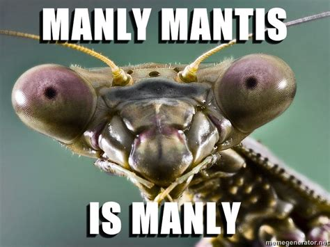 Mantis Meme - mantis know your meme