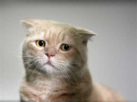 imagenes gatos tristes gatos tristes o verso do inverso