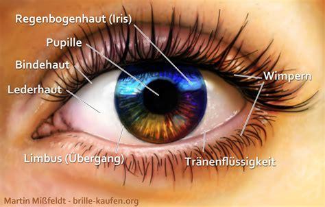 Beschriftung Des Auges by Aufbau Des Menschlichen Auges Lasikon