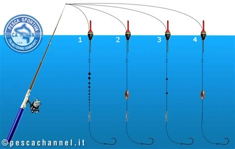 piombatura denti oltre 1000 idee su spigola su halibut salmone