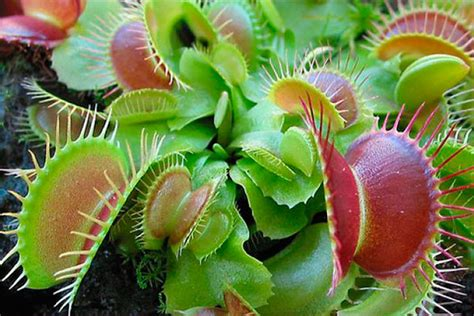 imagenes de flores y animales im 225 genes de plantas y animales en peligro de extinci 243 n