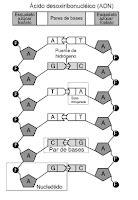 copiar cadenas en c aristarcos de paseo por el cosmos adn una mol 233 cula