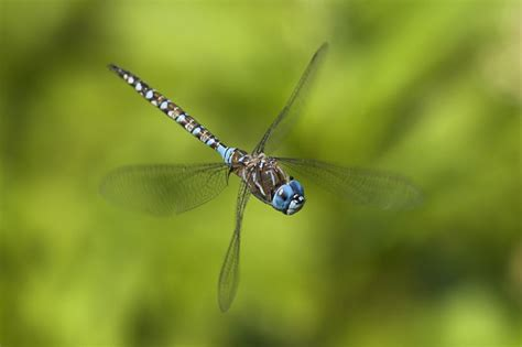 7 things you never knew about dragonflies mnn mother