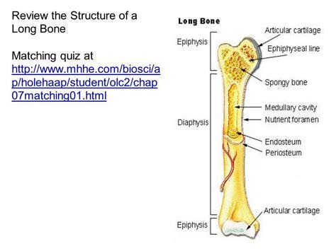Labeled Bone Diagram Anatomy Organ