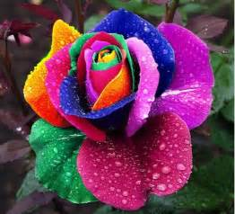 Colourful Climbing Plant - rainbow rose pictures photos and images for facebook pinterest and twitter