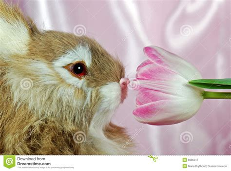 sniffing royalty free stock photography image 8685547