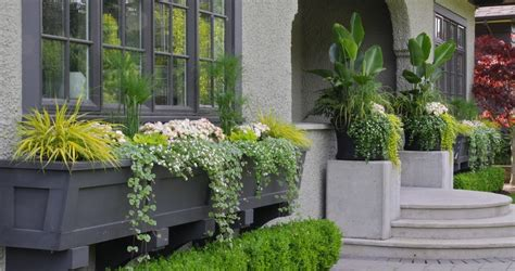 shrubs for front door entrances window box planters landscape traditional with container
