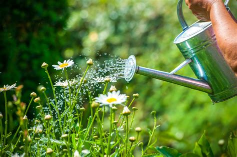 Garten Pflanzen Bilder by Pflanzen Mit Bier Gie 223 En Ein Toller Pflanzend 252 Nger