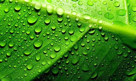 green leaf  water droplets hd wallpaper wallpaperscom