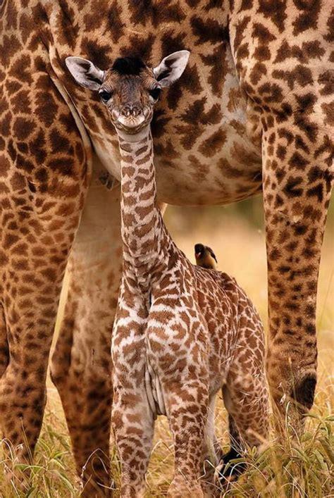 libro amazing animal babies beautiful animals safaris safari amazing beautiful animal safari pictures