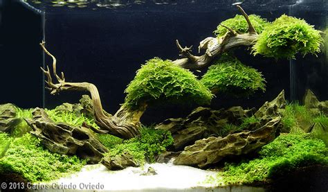 Aga Aquascaping by 2013 Aga Aquascaping Contest 601